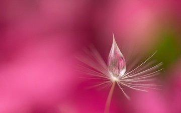 вода, природа, роса, капля, былинка
