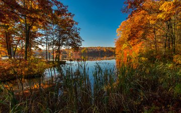 grass, trees, lake, nature, autumn, usa, colorado, autumn. lake, ice lakes