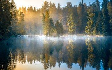 деревья, озеро, лес, отражение, утро, туман, рассвет, осень, финляндия
