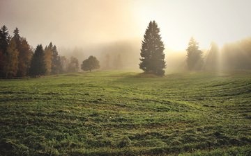 grass, trees, morning, fog, field