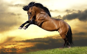 the sky, horse, grass, clouds, sunset, animals, jump, mane