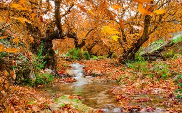trees, nature, forest, leaves, stream, autumn