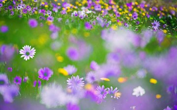 flowers, blur, meadow, wildflowers
