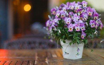 цветы, букет, анютины глазки, боке, фиалки