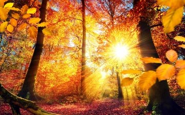 trees, the sun, nature, leaves, rays, autumn, snag