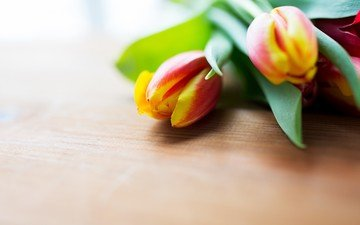 flowers, spring, tulips, wooden surface