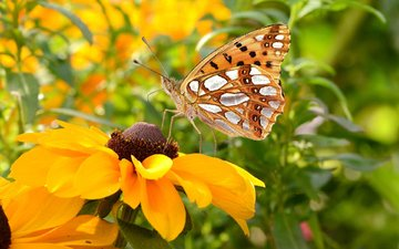 flowers, insect, petals, butterfly, wings