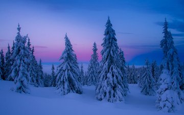 the sky, trees, snow, nature, winter, tree
