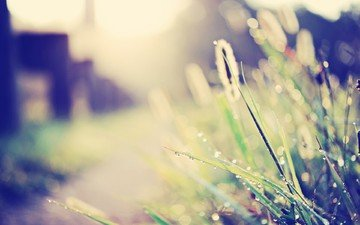 свет, трава, роса, капли