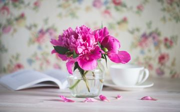 flowers, petals, pink, a bunch, peonies