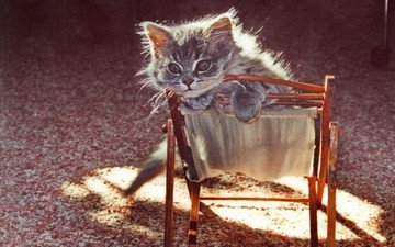 cat, muzzle, mustache, look, kitty, chair