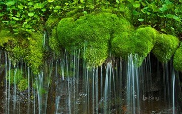 водопад, сша, мох, вирджиния, национальный парк, шенандоа, виргиния, национальный парк шенандоа