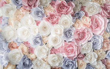 flowers, buds, roses, petals, pink, white, blue