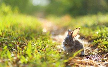 трава, природа, ушки, кролик, заяц, зайчик