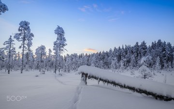 the sky, trees, snow, forest, winter, the snow