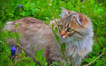 nature, cat, muzzle, mustache, look