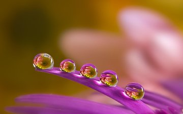 macro, flower, drops, petals, blur, a drop of water, miki asai