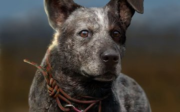 muzzle, look, dog, ubisoft, game, far cry 5