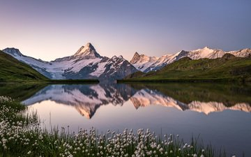 the sky, flowers, lake, mountains, snow, reflection