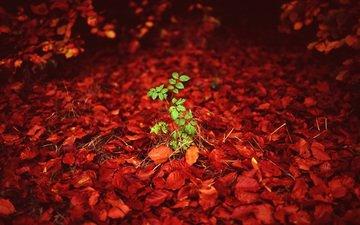 листья, листва, осень, росток, kieran elson