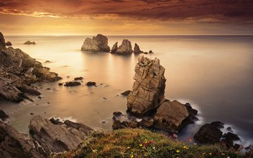 flowers, rocks, stones, shore, sea, horizon