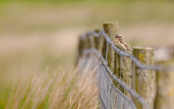 grass, nature, wire, the fence, bird