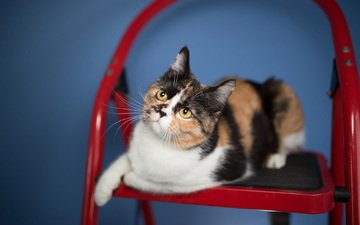 глаза, фон, кот, усы, кошка, взгляд, стул