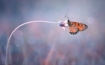 insect, butterfly, wings, blur, plant, stem, bokeh