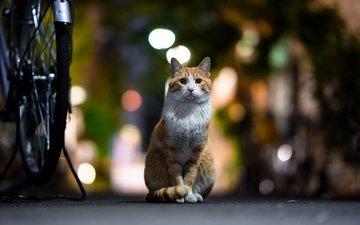 фон, кот, мордочка, усы, кошка, взгляд, боке