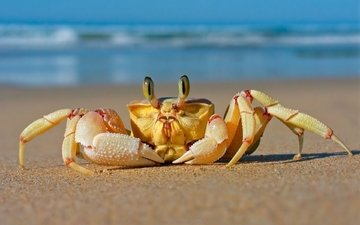sea, sand, beach, crab