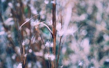 растения, размытость, стебли, пух, пушинки, былинки