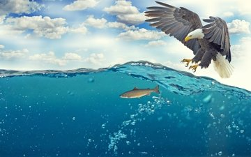 the sky, clouds, water, sea, wings, bird, beak, feathers, claws, hunting, bubbles, fish, bald eagle