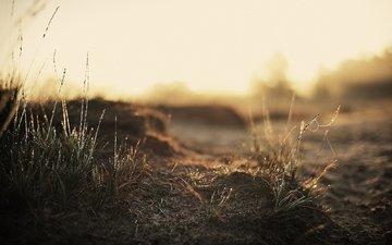 свет, трава, земля, тень, травинки