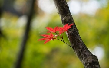 branch, nature, tree, leaves, autumn, blur, trunk