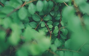 природа, листья, ветки, размытость, растение