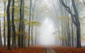 road, trees, nature, forest, park, fog, autumn