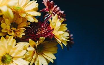 цветы, букет, герберы