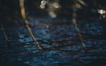вода, ветки, блики, круги