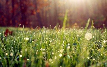 трава, роса, капли
