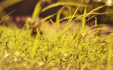 трава, растения, макро