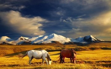the sky, grass, clouds, mountains, field, horse, horses