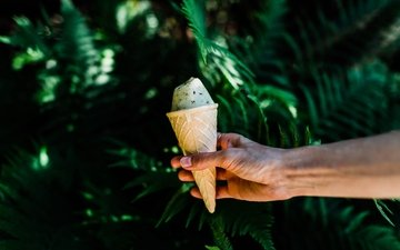 nature, hand, leaves, ice cream, plant, waffle cone