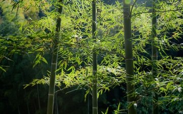trees, leaves, bamboo, stems