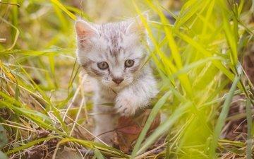 трава, кот, мордочка, усы, кошка, взгляд, котенок, милый