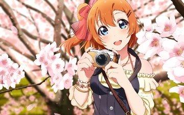 улыбка, камера, love live, коусака гонока, sakura petals