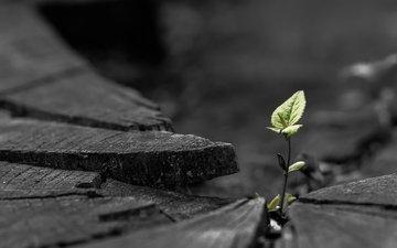 природа, листья, макро, растение, росток, пень