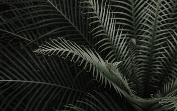 leaves, branches, plant, fern