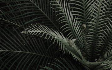 листья, ветки, растение, папоротник