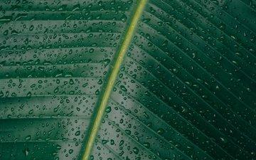 природа, зелёный, макро, капли, лист, прожилки