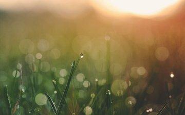 трава, природа, размытость, боке, капли воды